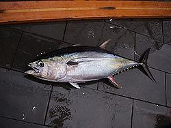 Fish4499_.jpg