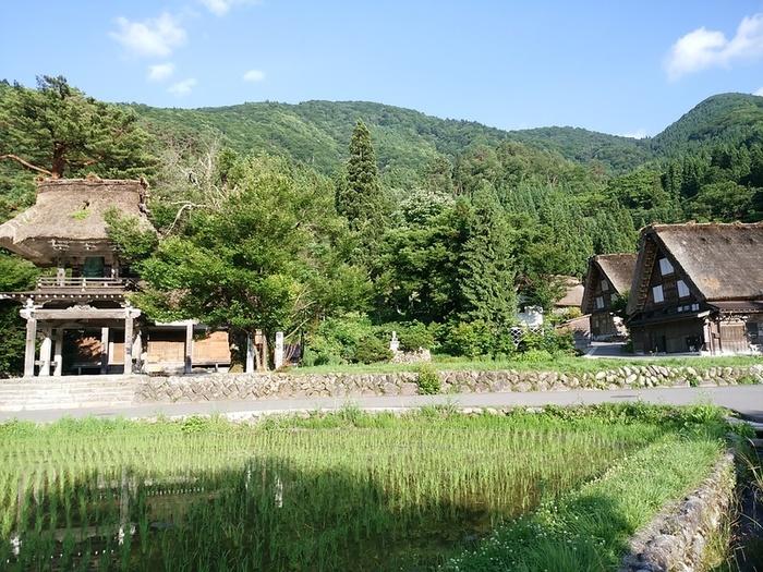 夏休みが始まる一足先に、旅行にいきませんか? 世界文化遺産 白川郷 ①