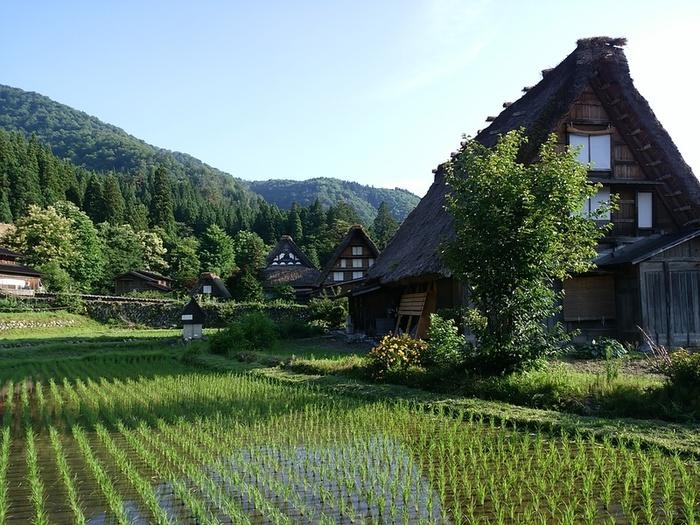 夏休みが始まる一足先に、旅行にいきませんか? 世界文化遺産 白川郷 ②