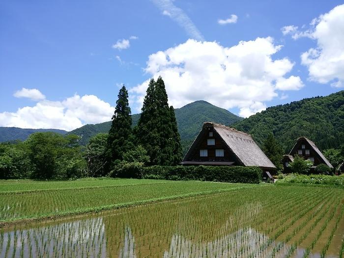 夏休みが始まる一足先に、旅行にいきませんか? 世界文化遺産 白川郷 ⑧