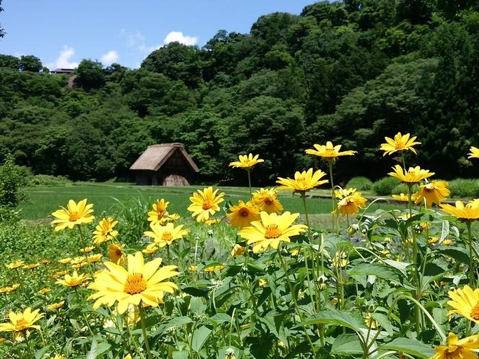 夏休み~せっかく白川郷にいらしたら、温泉で疲れを癒しませんか? ④