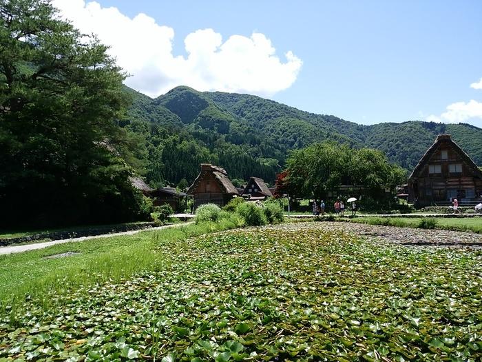 そろそろ夏休みモードの白川郷で、熱ーい世界遺産を楽しんでくださいね! ⑥