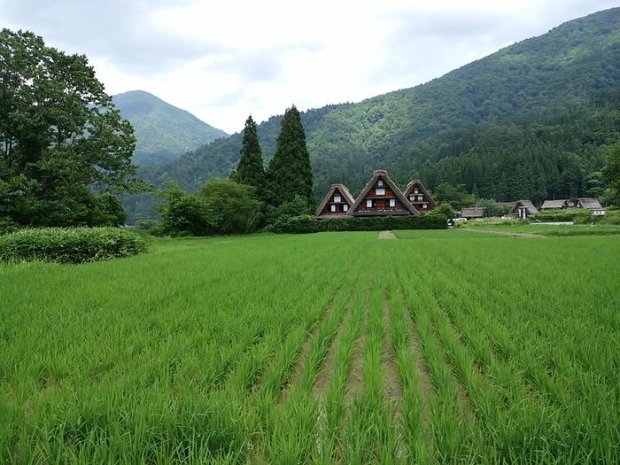 待ちに待った夏休みの世界遺産旅行!大自然を眺めながら、白川郷合掌集落へ ①