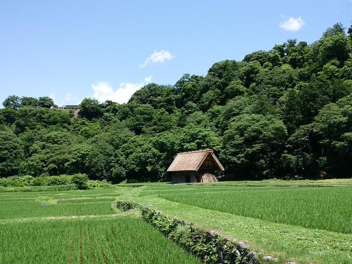 待ちに待った夏休みの世界遺産旅行!大自然を眺めながら、白川郷合掌集落へ ④
