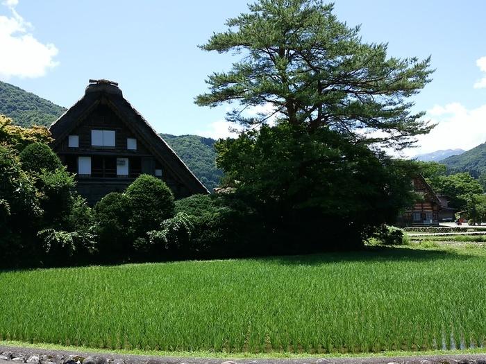 待ちに待った夏休みの世界遺産旅行!大自然を眺めながら、白川郷合掌集落へ ⑤