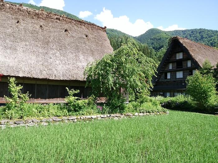 待ちに待った夏休みの世界遺産旅行!大自然を眺めながら、白川郷合掌集落へ ⑥