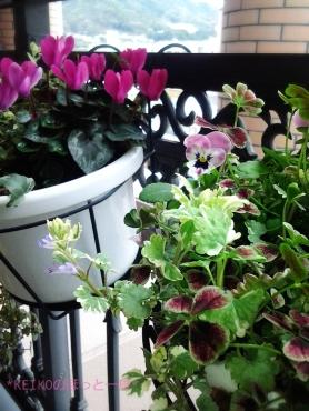 我が家にも小さな春