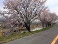 2015_4_1桜