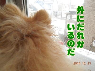 2014122301.jpg