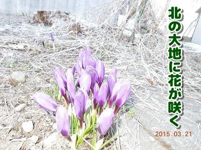 2015032201.jpg
