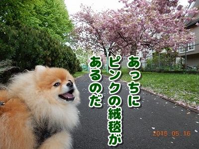 2015051705.jpg