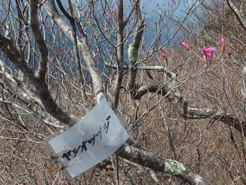 20150425_inahukumiyama-019.jpg