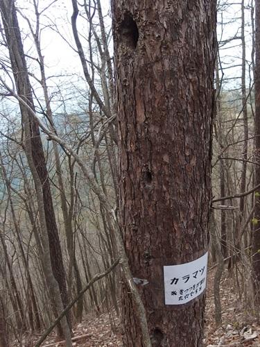 20150425_inahukumiyama-026.jpg