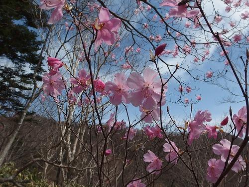 20150503_kesamaruyama-024.jpg