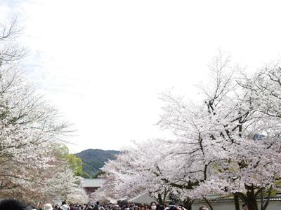 150404_daigo01.jpg