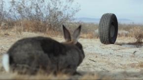 ウサギ対タイヤ