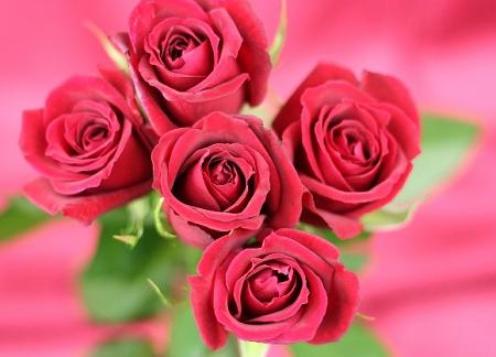 Rose_Fotor.jpg
