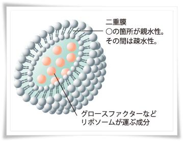 リルジュ リポゾーム化の図