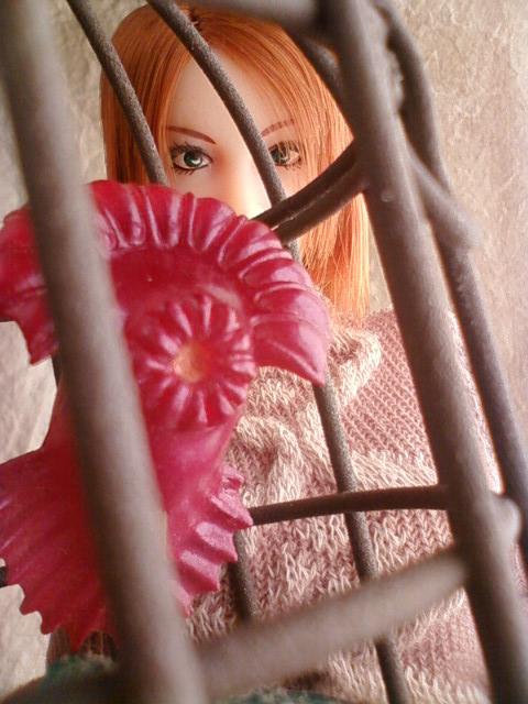 bird_cage_d.jpg