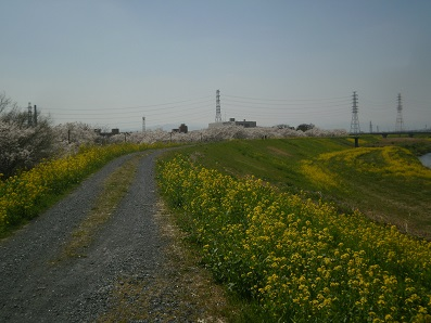P3260161.jpg