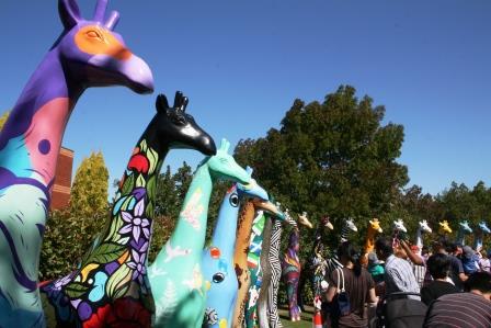 big giraffes