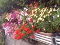 お花のよろこび