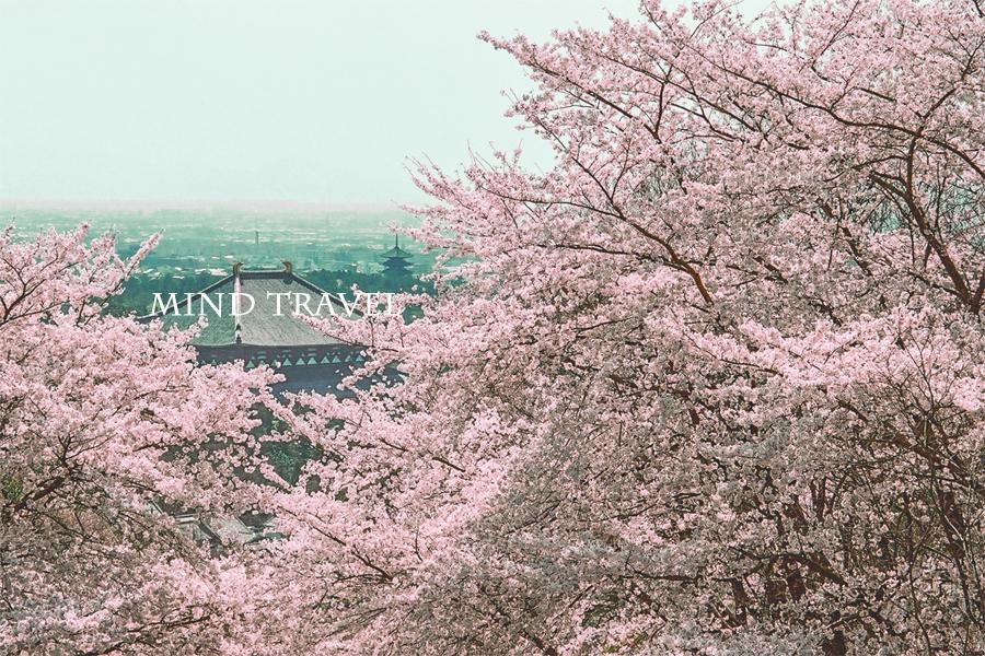 奈良奥山ドライブウェーより大仏殿・興福寺五重塔を望む
