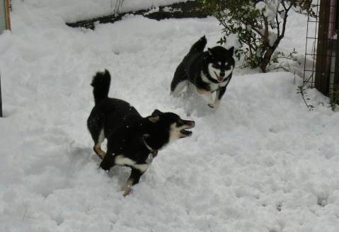 雪クロマロ