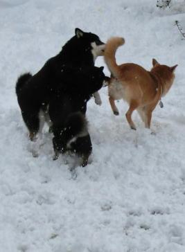 雪3ワン1