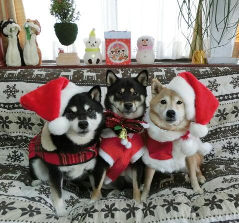 3ワンクリスマス