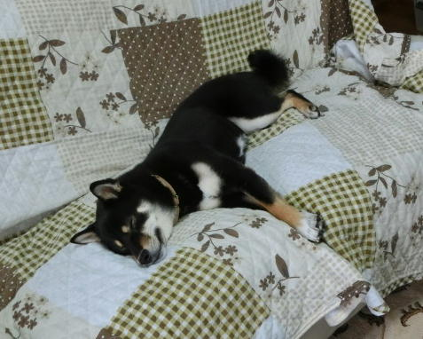 寝る マロ