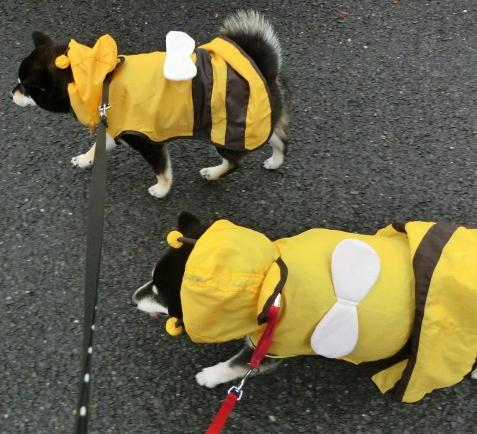 元気に雨散歩
