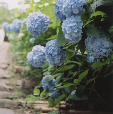 TOY-808_Yashica.jpg