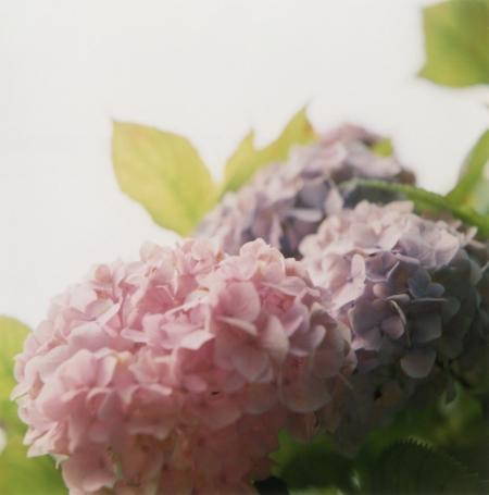 TOY-814_Yashica.jpg