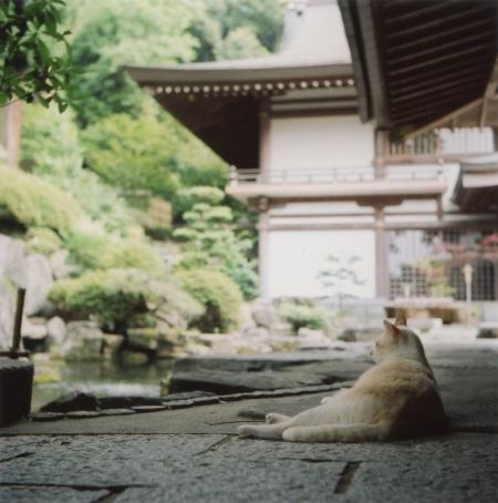 TOY-817_Yashica.jpg