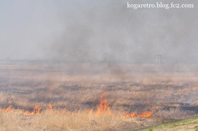 渡良瀬遊水地のヨシ焼き3