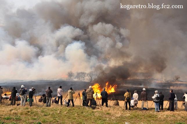 渡良瀬遊水地のヨシ焼き4