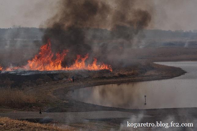 2015渡良瀬遊水地のヨシ焼き5