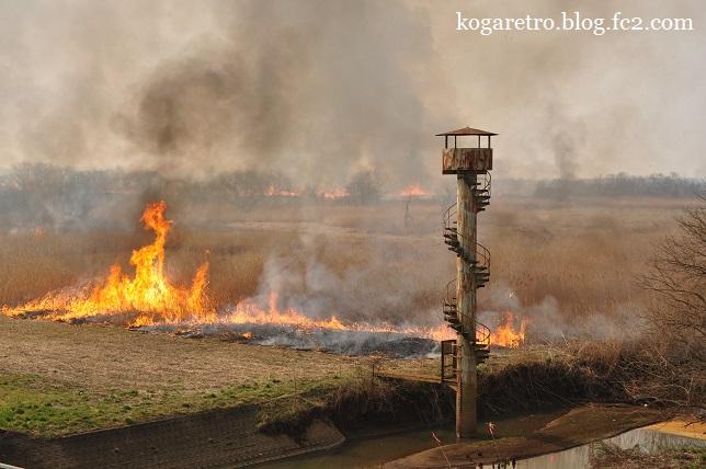 2015渡良瀬遊水地のヨシ焼き7