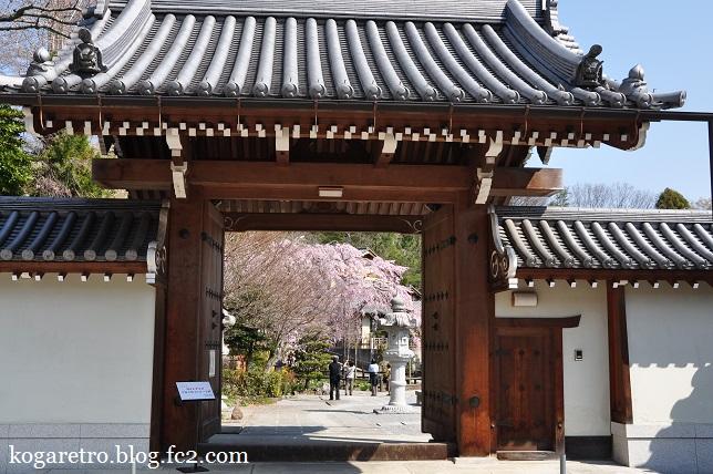 太山寺のシダレザクラ