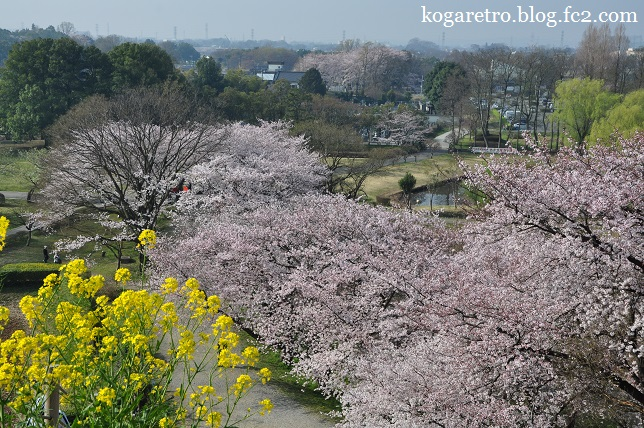 さきたま古墳の桜3