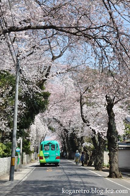 お雀神社の桜3