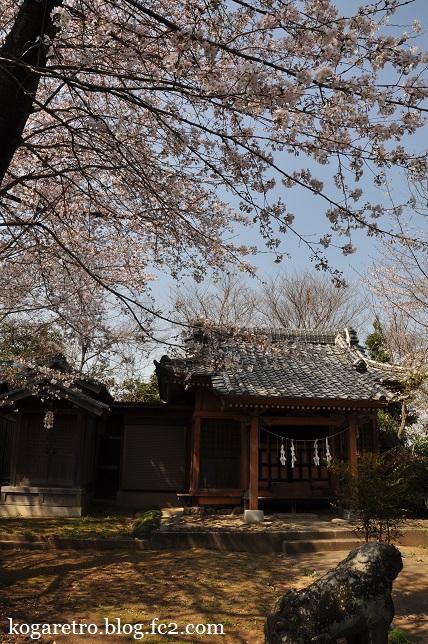 頼政神社の桜