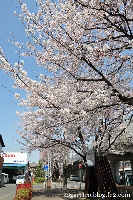 四季の径の桜2