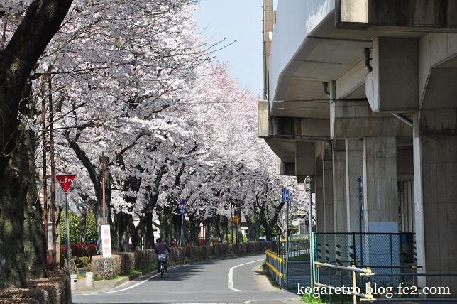 四季の径の桜3