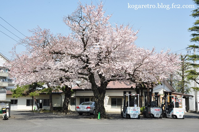 ミヤト倉庫の桜2