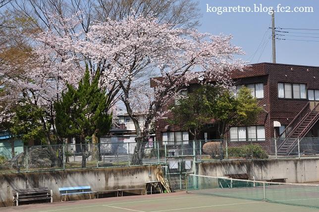 けやき公園の桜2