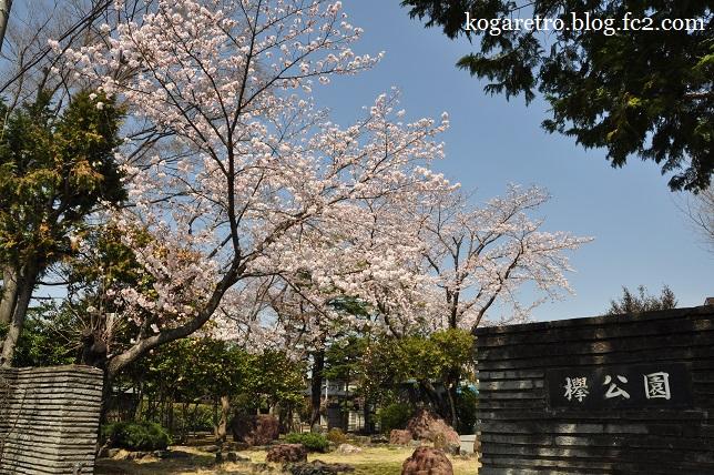 けやき公園の桜