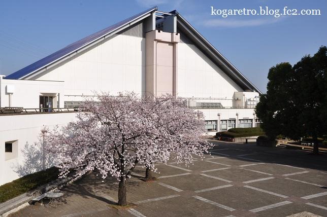 古河市中央運動公園の桜
