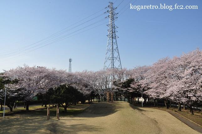 古河市中央運動公園の桜3